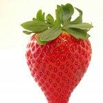 Strawberries Calinda