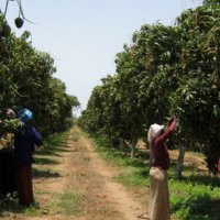 Special Fruit creates platform for development of agro chain in Africa