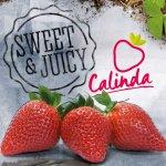 Calina : news, updates and inspiration