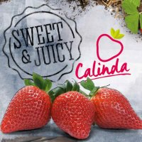 Calinda : news, updates & inspiration
