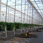 Het verse teeltseizoen aardbeien van België en Nederland start deze week