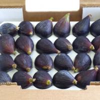 &lb;Figs Peru & Israel Caliber 20Brazil Caliber 24&lb;