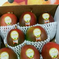 &lb;New season of tree ripened Mangoes has started&lb;