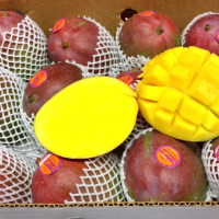 &lb;Mango by Air - KentPeru&lb;