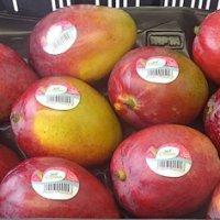 AGF.nl: Special Fruit focust op 100% fiberless mango's